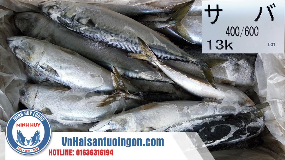 Cá sapa Nhật bông mai 2