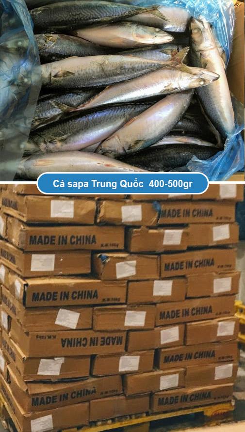 Cá sapa Trung Quốc 400 - 500 gr