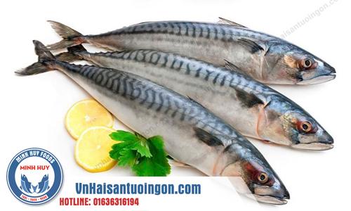 Ăn cá giúp tăng cường miễn dịch