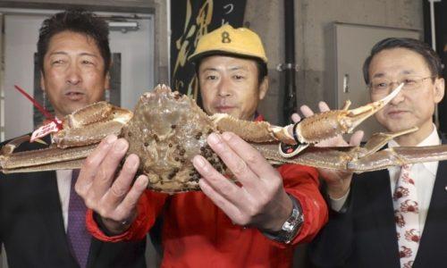 Trong phiên đấu giá tại chợ hải sản ở tỉnh Tottori đầu tháng 11/2017, một con cua tuyết đã được bán với giá 5 triệu yên (hơn 1 tỷ đồng).