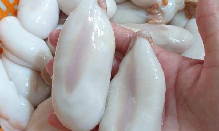 Trứng mực nang có kích thước lớn